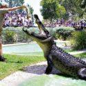 reptilepark