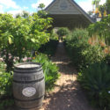 Hunter Valley Wine Tours Pepper Tree