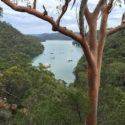 Northern Beaches Tours Kuringgai America Bay