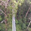 Southern Highlands Tours Illawarra Fly Treetop